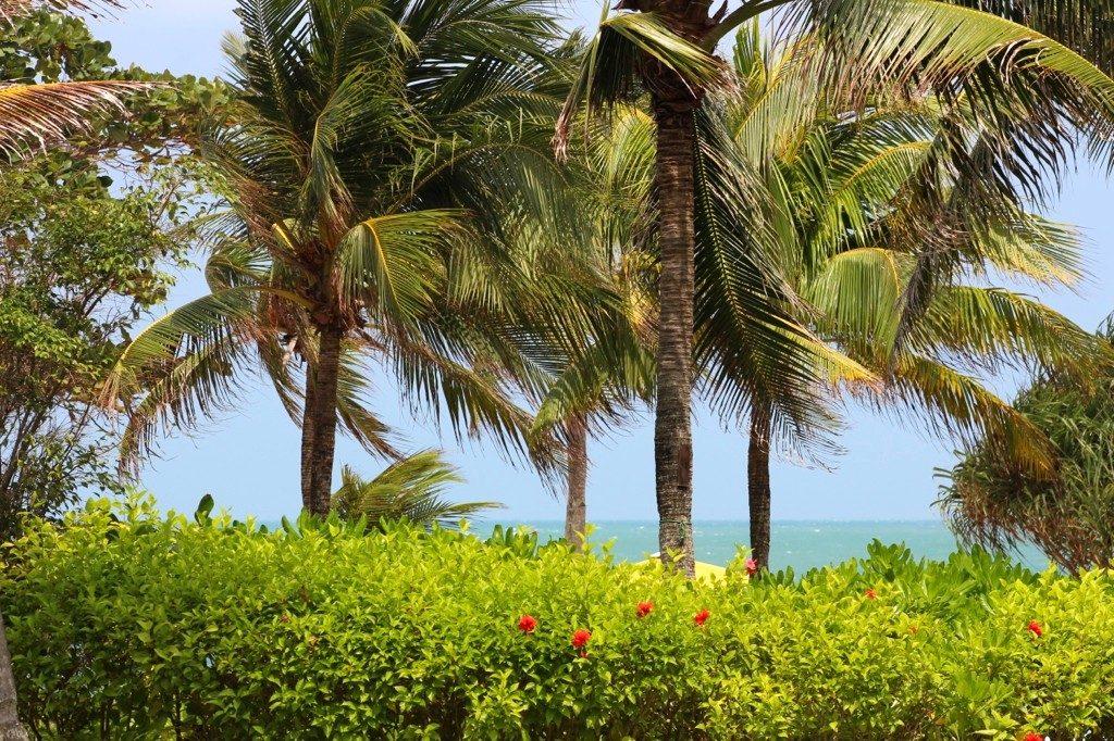 Palmy, podróże